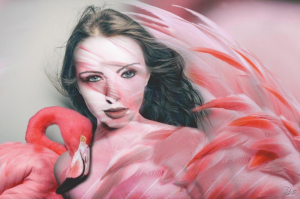 Flamingofinal-3.jpg